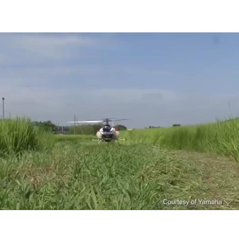 پهباد و کشت برنج