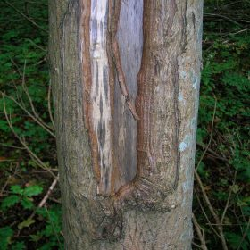 خشکی زمستانی درخت
